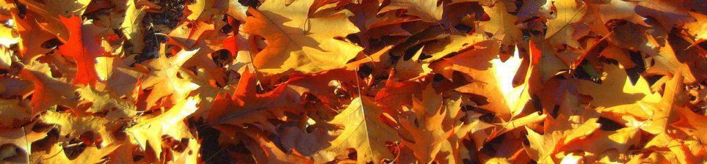 herfstblad uit de goot halen